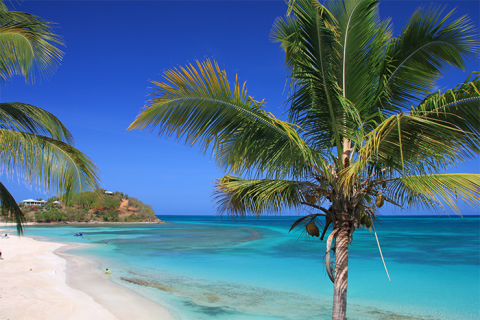 palm tree set against white sands and blue sea